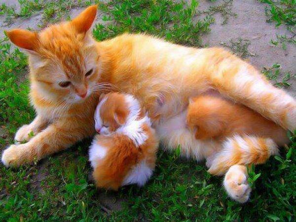Syeilendra really loves cats..